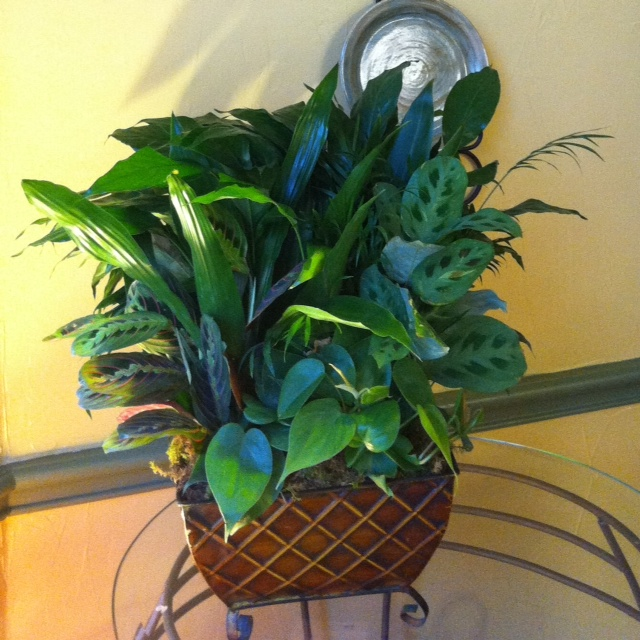 10 things you didn t know about houseplants and air for Indoor plants for better air quality