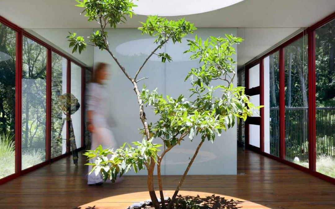 Great ideas to use Trees for The Interior of Your Home