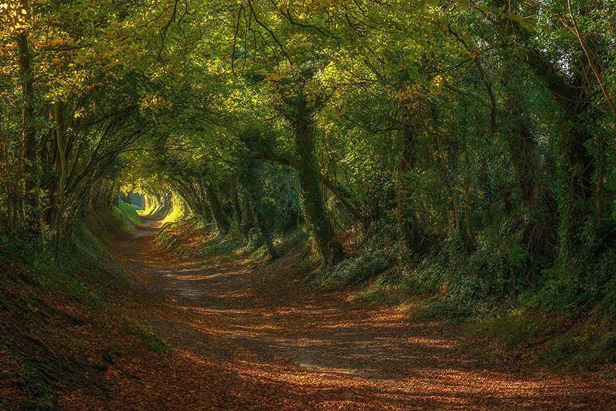 Halnaker Windmill Path, Sussex