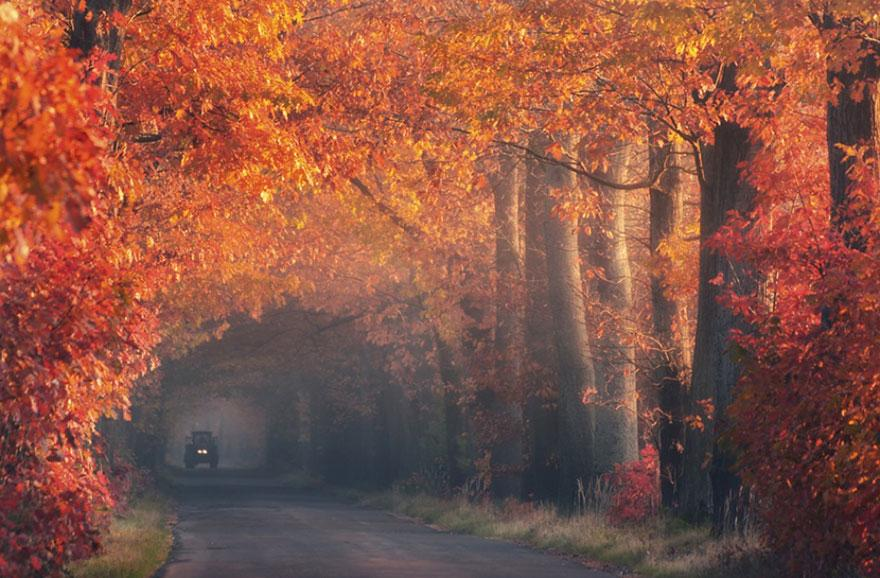 Misty Tree Tunnel