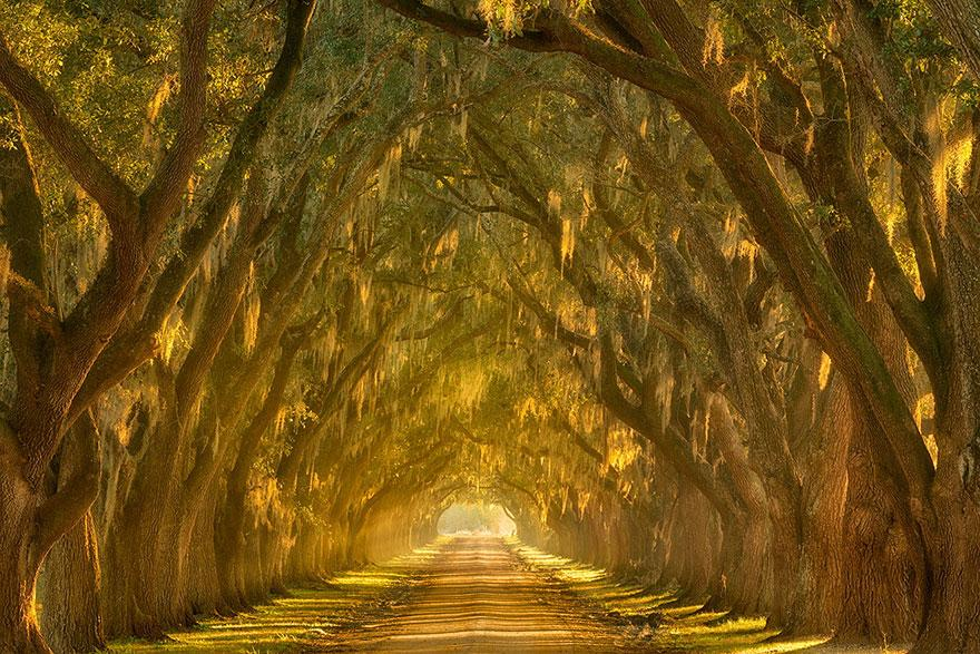 Oak Alley, New Orleans, Louisiana
