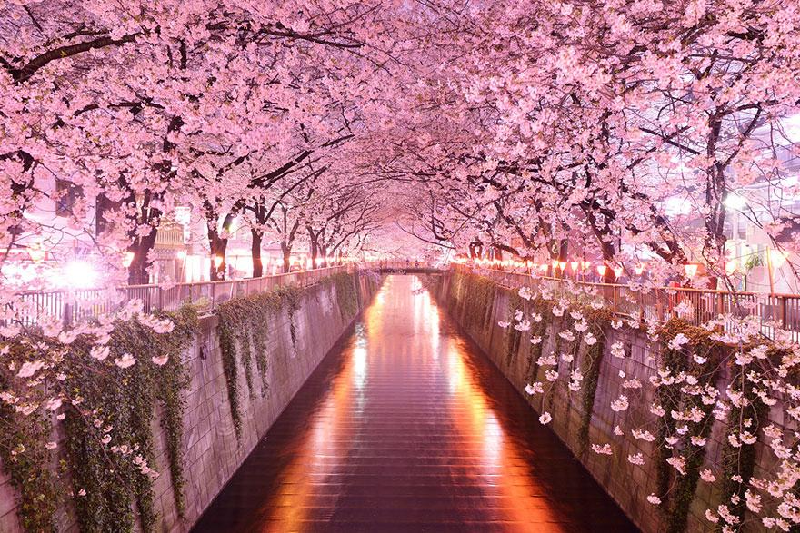 16 of the World's Most Beautiful Tree Tunnels