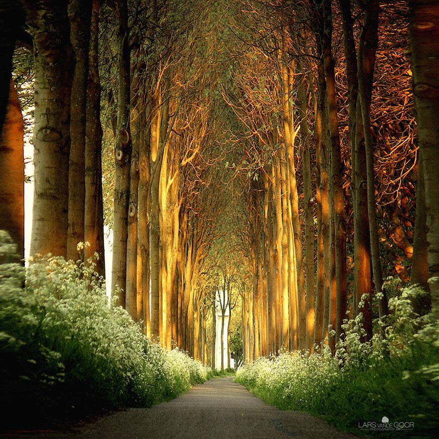Tree Tunnel, Netherlands