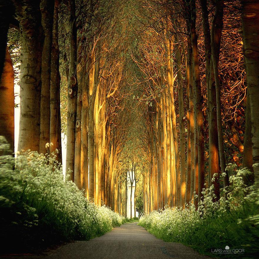Tree Tunnel, Netherlands
