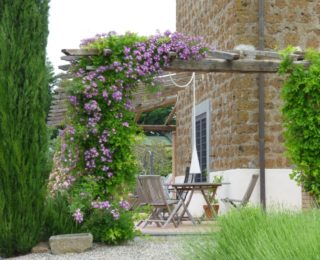 15 Climbing Plants for Pergolas