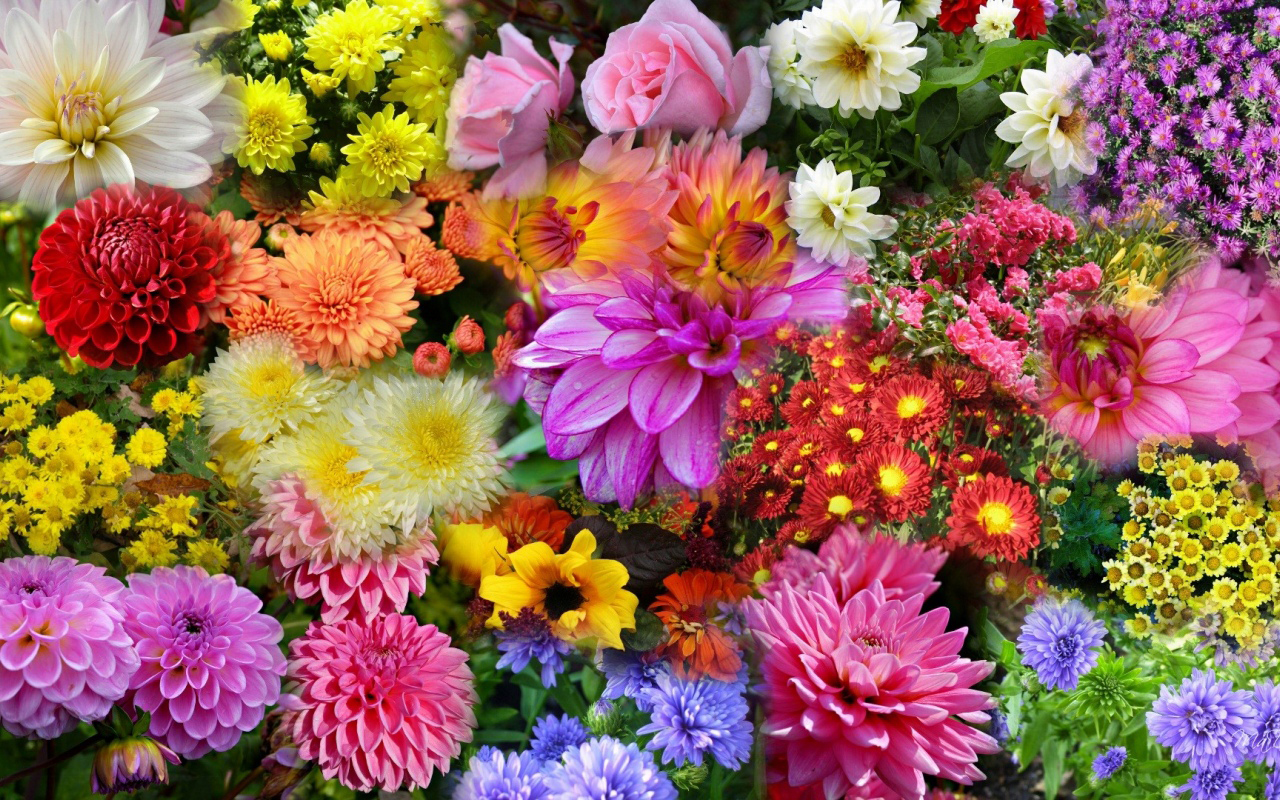 Image result for blooming plants