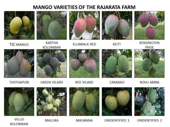 Image result for mango varieties