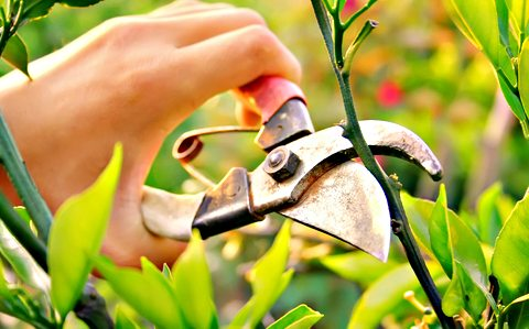 Image result for pruning
