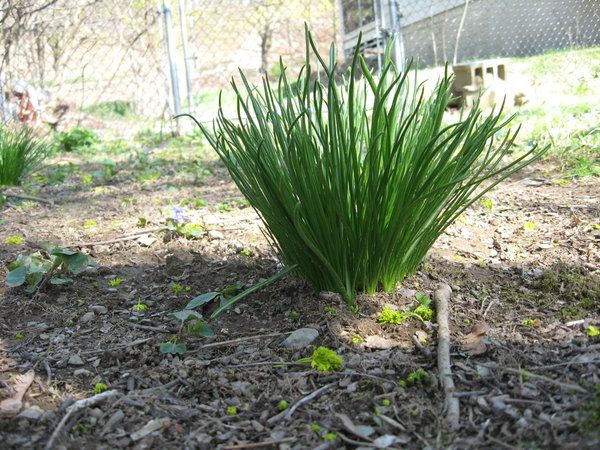 Image result for tufts of weeds