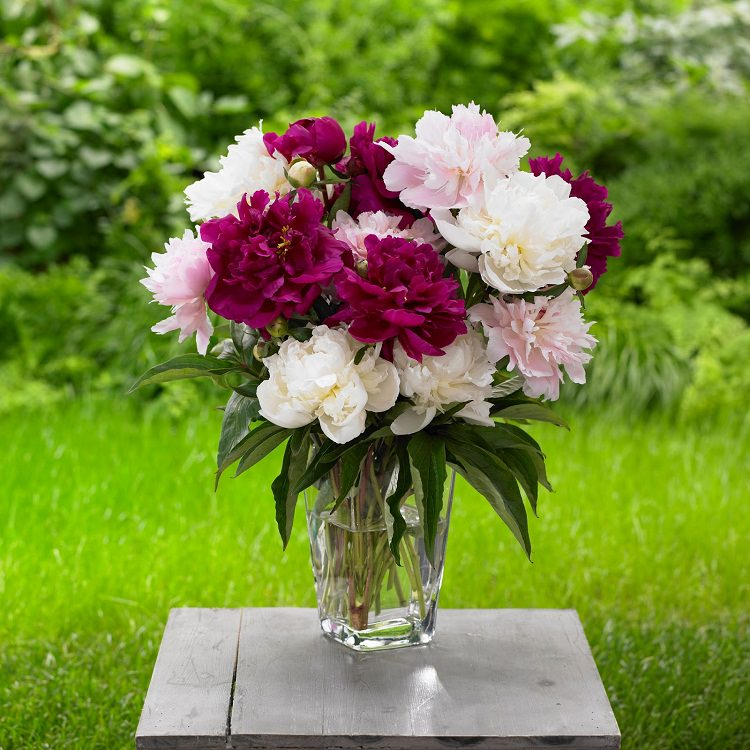 keep cut flowers fresh with baking soda