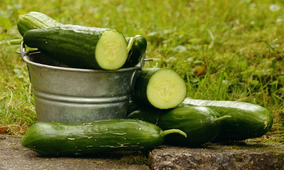 Image result for cucumber seed