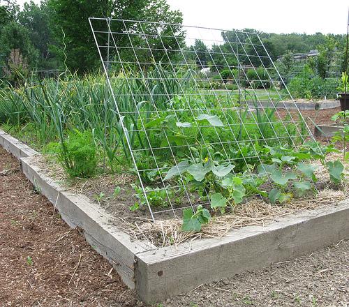 Image result for cucumber trellis