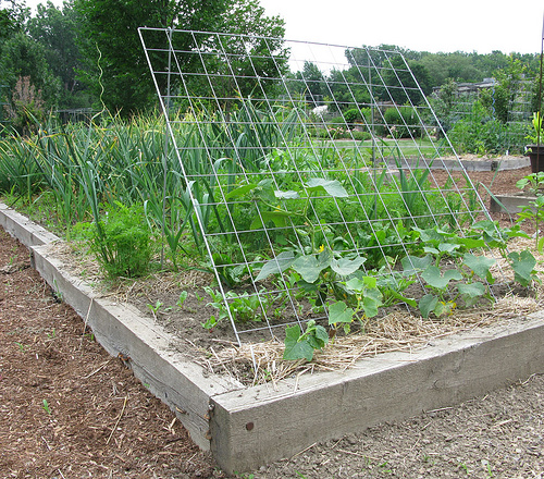 Image result for cucumber trellis