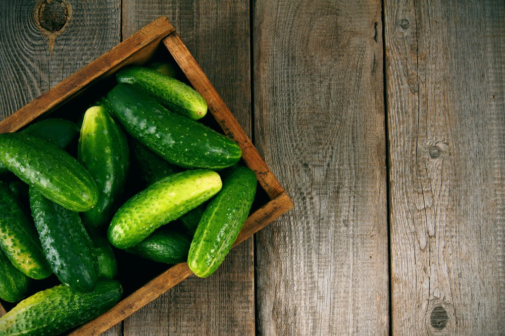 Image result for Growing Cucumbers Vertically