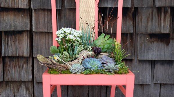 succulent chiar planter