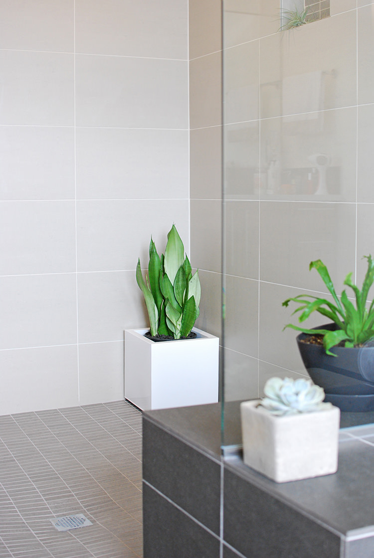 Bath & Shower Plants | How to Join The Trend