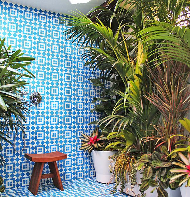 Bath & Shower Plants / Join The Trend