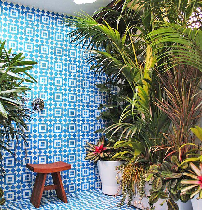 Φυτά για Μπάνιο & Ντους /  Εγγραφείτε στην Τάση