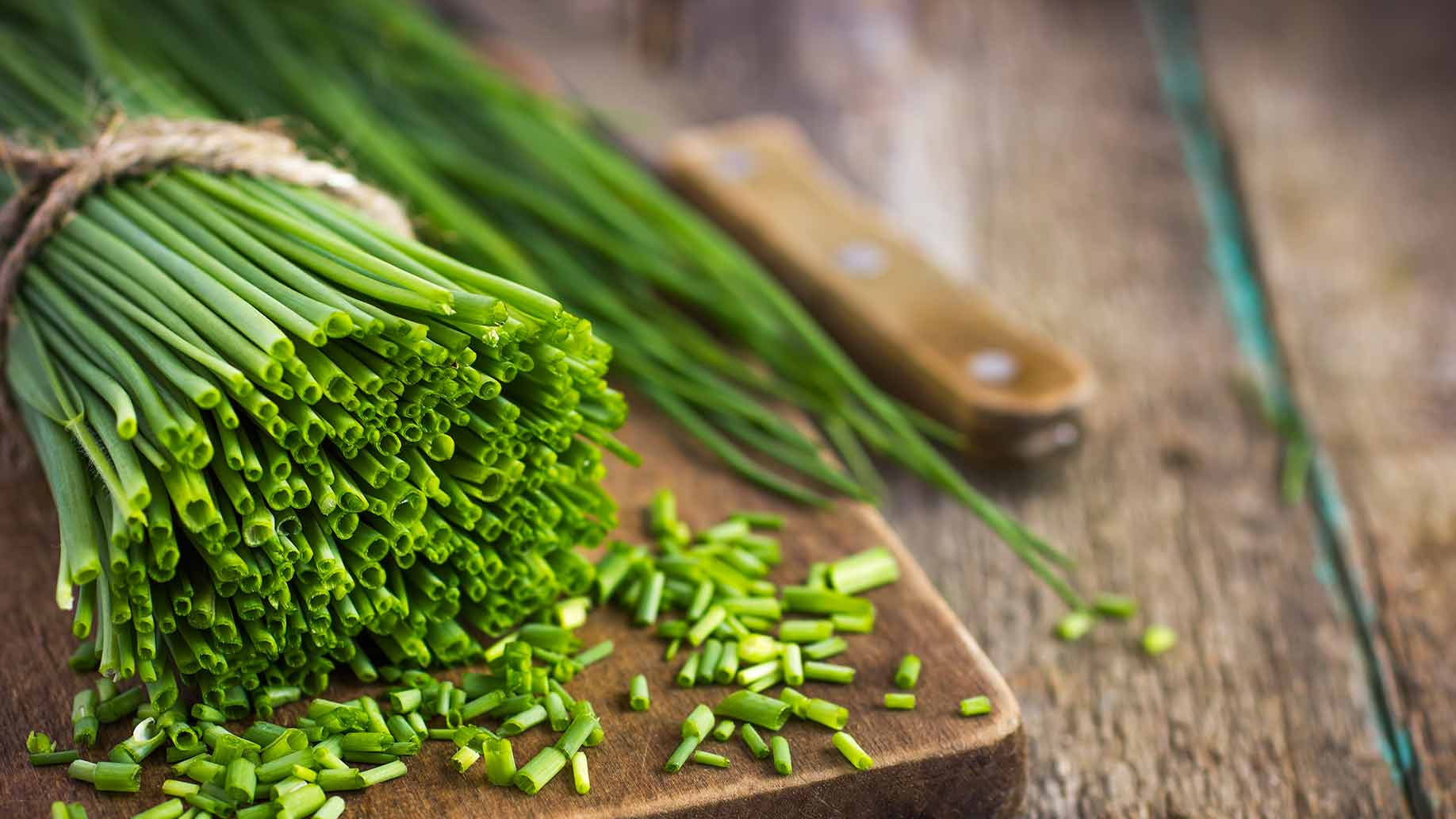 Image result for chives plant