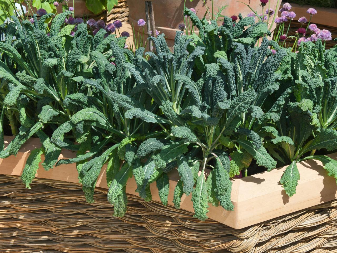 Image result for KALE plant pot