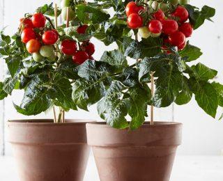 12 Φυτά Που Μπορείτε Να Μεγαλώσετε Σε Εσωτερικούς Χώρους Αυτό Το Χειμώνα