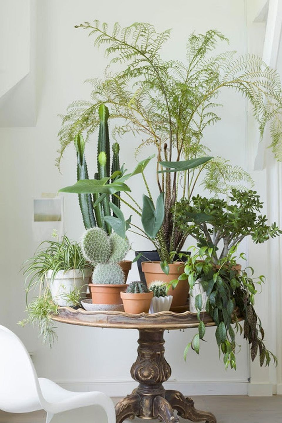 Cool Plant Stand Design Ideas for Indoor Houseplants ... on House Plant Stand Ideas  id=48908
