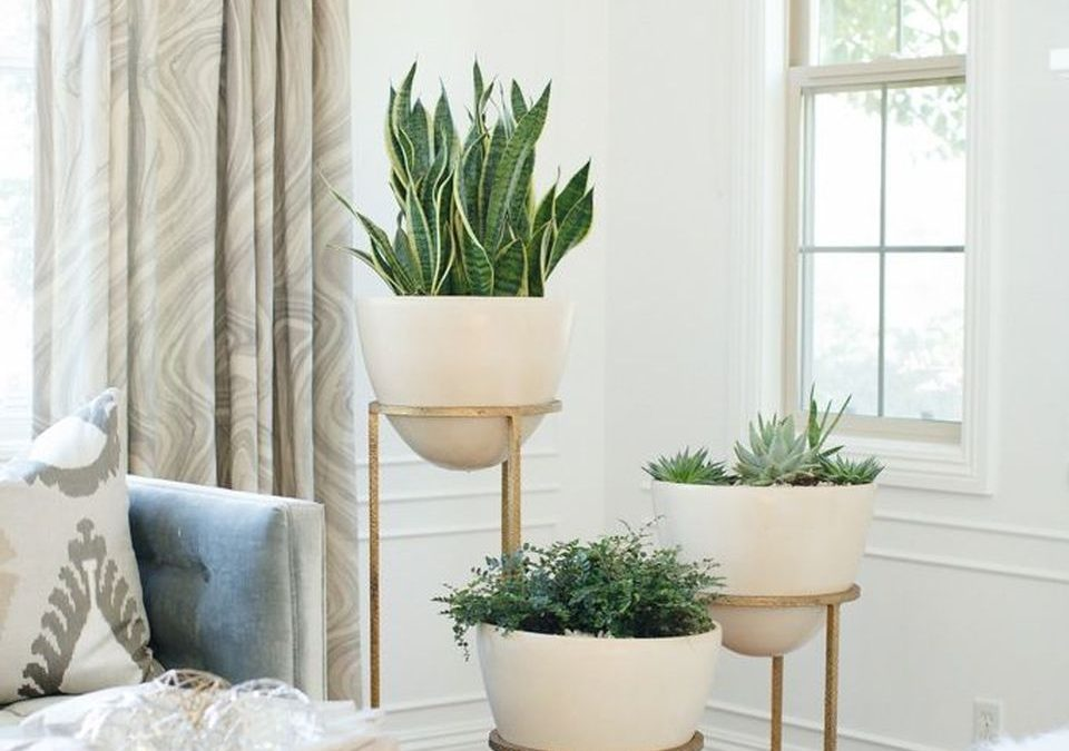 Cool Plant Stand Design Ideas for Indoor Houseplants