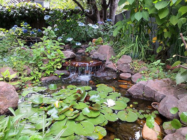 https://www.thegardenglove.com/wp-content/uploads/2015/05/perfect-pond-plants-2.jpg