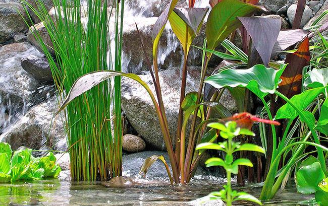 perfect pond plants
